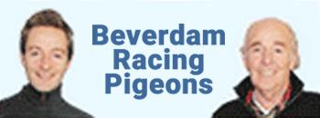 Beverdam Racing Pigeons